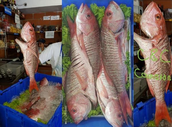 Pescado fresco | C&C Camarones